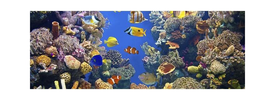 Water Tanks, Basins, aquarium