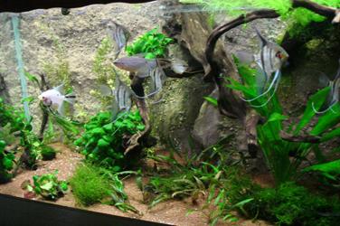 Sicomin Aquarium Réalisation Et Réparation